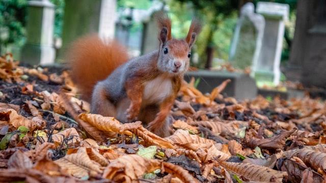 Trauerrednerin Bettina Sorge aus Fürth liebt es, auf ihren Friedhofswegen Tieren zu begegnen, wie diesem Eichhörnchen